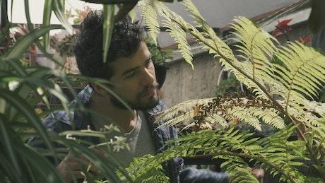 Gardener trims a fern