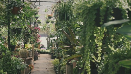 Gardener walking through a plant nursery