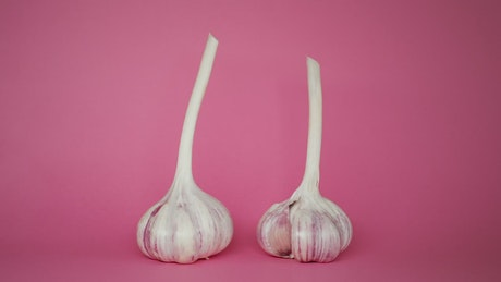 Garlic spinning on a pink background