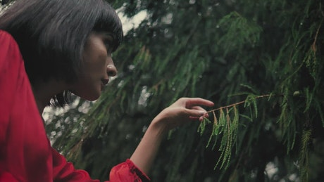 Girl gently touching the branches of a pine tree in the rain