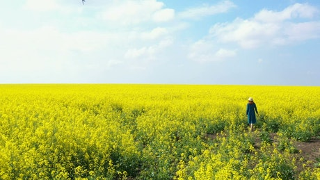 Girl walking through rapeseed field