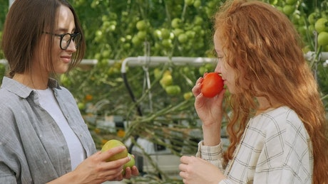 Girls checking tomatoes at a greenhouse