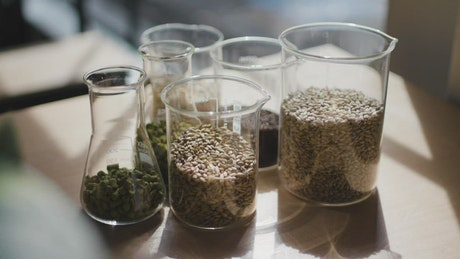 Glass beakers with barley seeds