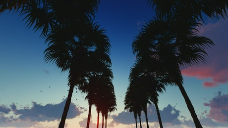 Going through a corridor of palm trees at dusk