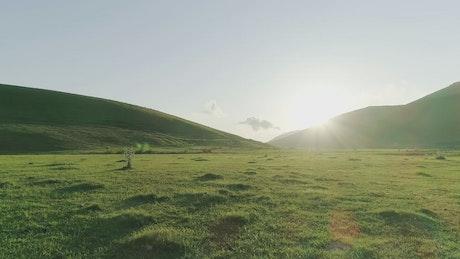 Golden sunshine over a meadow