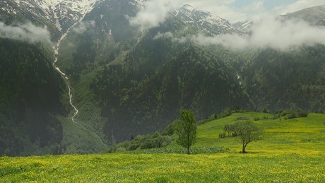 Gorgeous forest and mountain and a meadow with yellow flowers