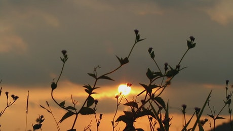 Graden plants silhouetted against the sky