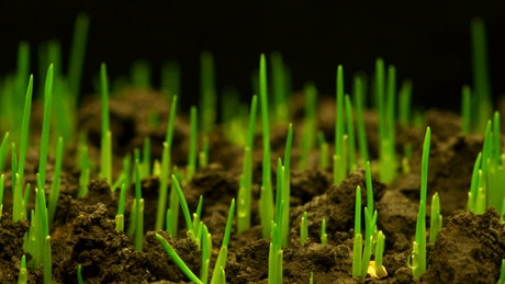 Grass growing time lapse