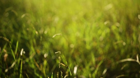 Grass moved by the wind