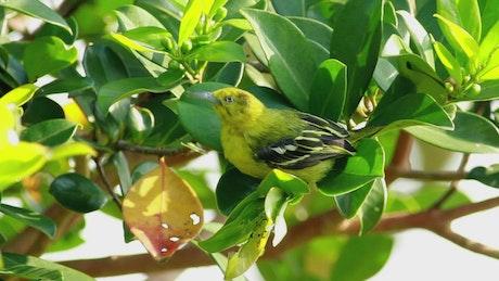 Green bird sitting on a leaf
