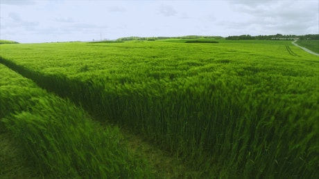 Green field during the summer