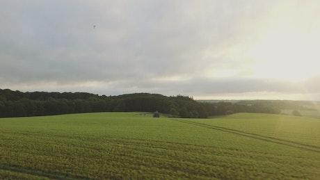 Green fields after the rain