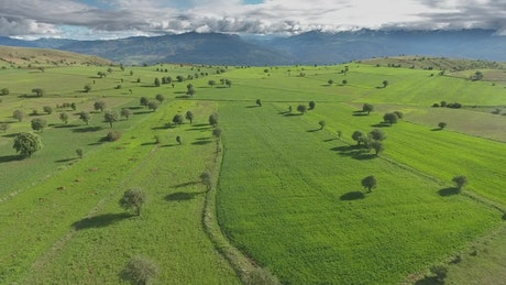 Green fields and trees on a plateau