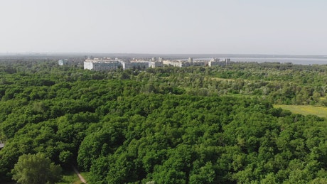 Green forest with a small town in the background