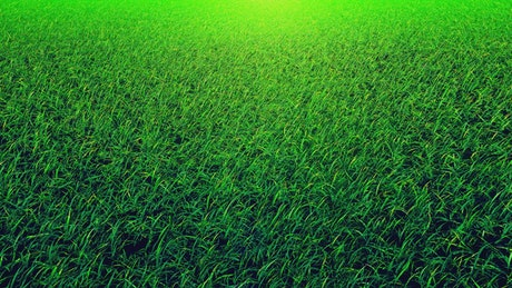 Green grass, close up loop video