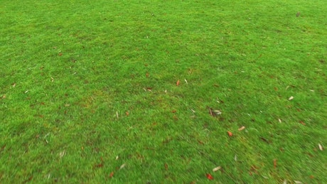 Green grass, ground view