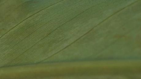 Green leaf surface, macro closeup