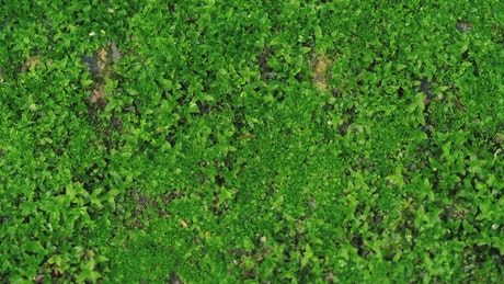 Green little grass, plants and leaves