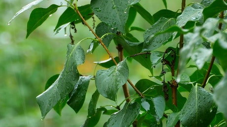 Green plant under heavy rain
