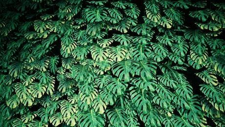 Green plants texture in the dark