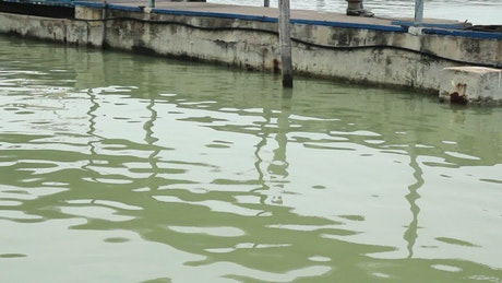 Green waters of a fishing dock