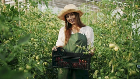 Greenhouse worker holds crate of vegetables
