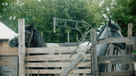 Grey and black horses in the stable