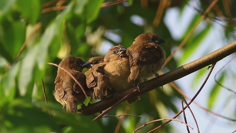 Group of birds resting in a tree