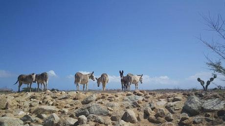 Group of donkeys on a deserted landscape