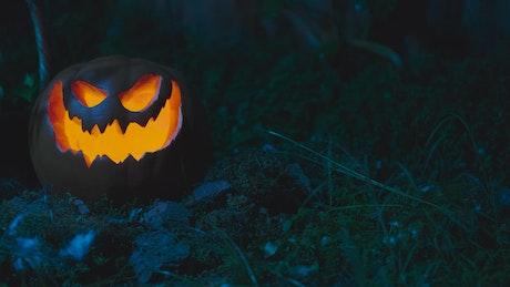 Halloween pumpkin in the garden