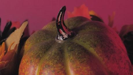 Halloween pumpkin treats