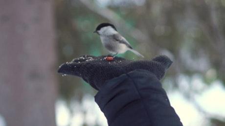 Hand feeding a tiny bird