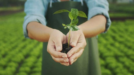 Hands hold watered plant with eco farm in background
