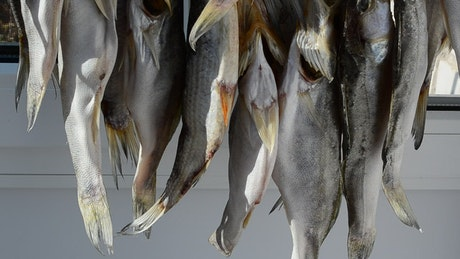 Hanging fish drying in the sun