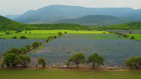 Harvest fields in a meadow in a mountain range