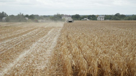 Harvester cutting down crops