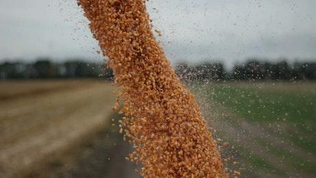 Harvester unloading crops