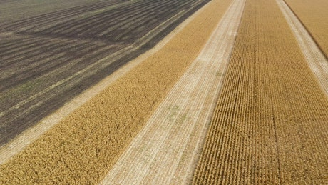 Harvesting large fields of crops with tractor