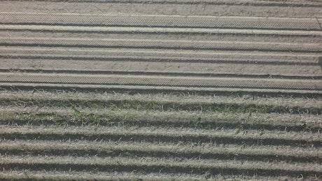 Harvesting potato crops
