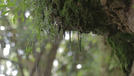 Heavy rain deep in a forest