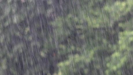 Heavy rain falling