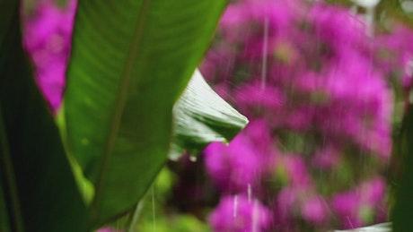 Heavy rain falling across wildflowers