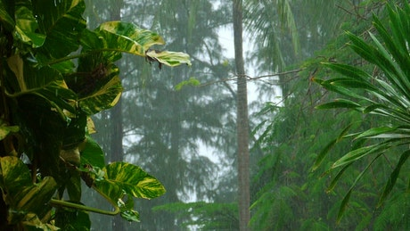 Heavy rain in slow motion on the tropical forest