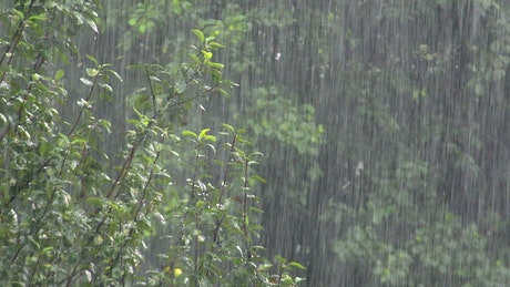 Heavy rain in the forest