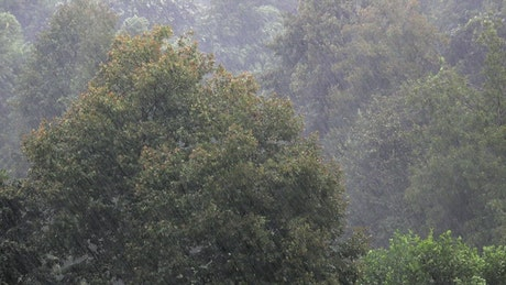 Heavy rain in the forest trees