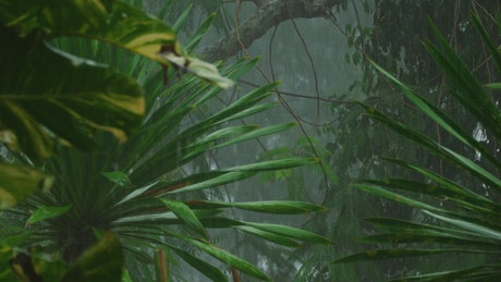 Heavy rain in the tropical forest