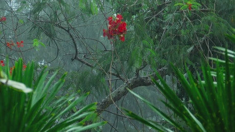Heavy rain in tropical forest
