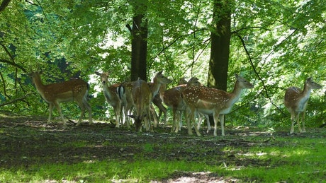 Herd of deer in the forest