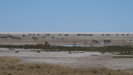 Herds of African animals on a vast plain