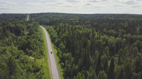 Highway through a large forest